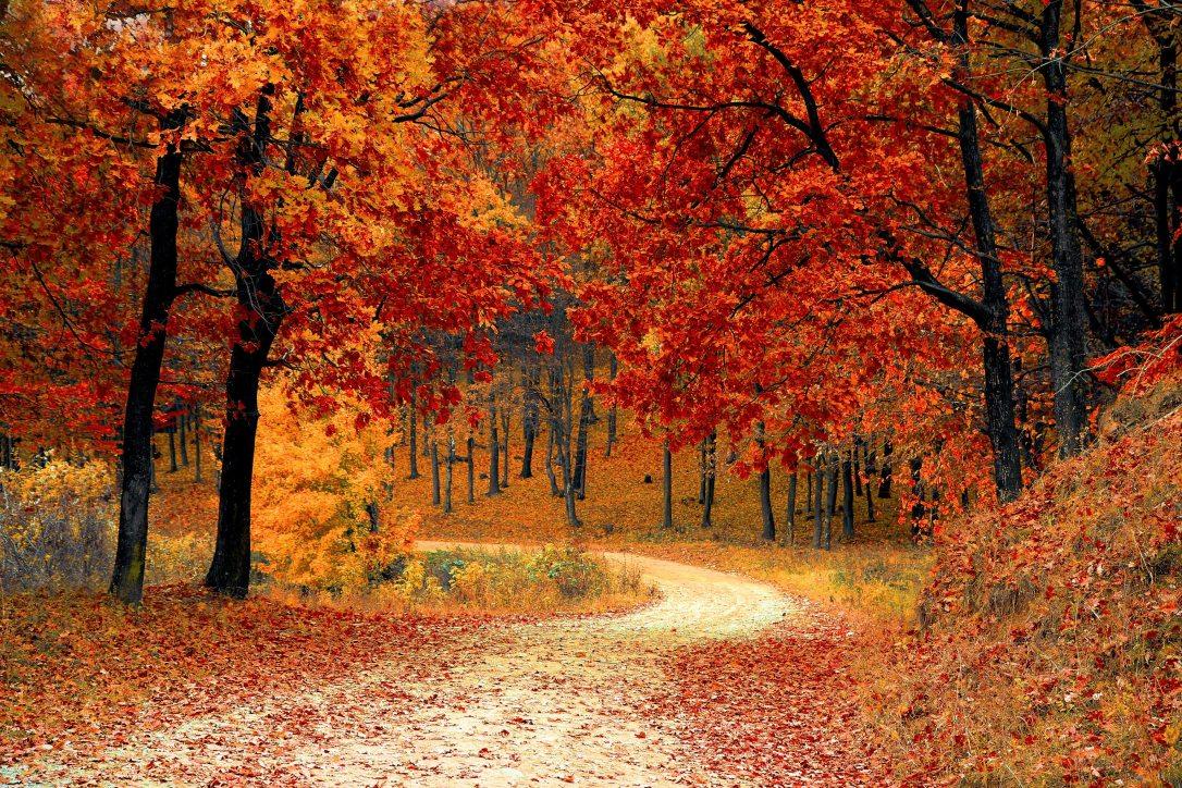 PEXELS FREE autumn-colorful-colourful-33109