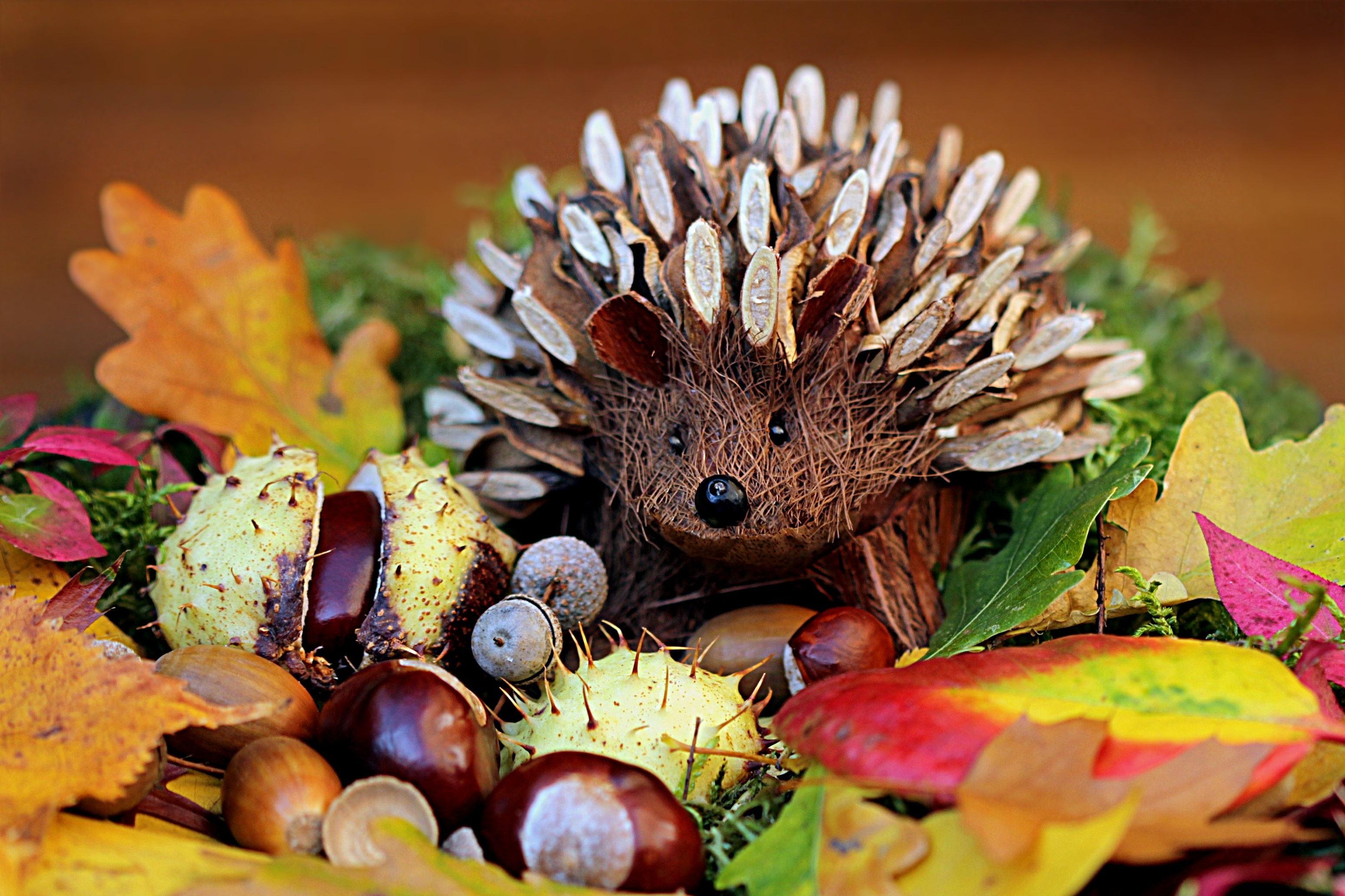 PEXELS FREE art-autumn-colorful-33577